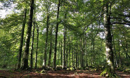 La selva de Irati, la magia de Navarra